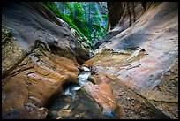 Stream in narrow watercourse, Orderville Canyon. Zion National Park ( color)