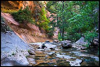 Lush oasis along Left Fork. Zion National Park ( color)