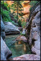 Emerald pools along Left Fork. Zion National Park ( color)
