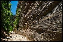 Open section with tall walls, Orderville Canyon. Zion National Park ( color)