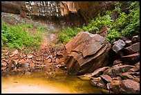 Upper Emerald Pool. Zion National Park ( color)