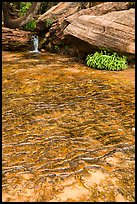 Travertine, Middle Emerald Pool. Zion National Park ( color)