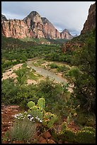 Cactus, Virgin River, and Zion Canyon. Zion National Park ( color)