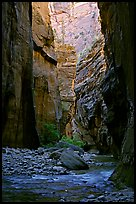 Tall walls in the Narrows. Zion National Park, Utah, USA.