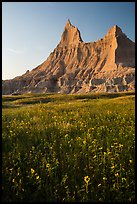 Sunflowers and pointed pinnacles at sunset. Badlands National Park, South Dakota, USA. (color)