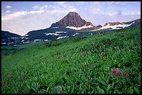 Wildflowers and peak at Logan pass. Glacier National Park, Montana, USA. (color)