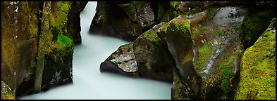 Stream flowing in mossy gorge. Glacier National Park (Panoramic color)