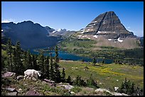 Hidden Lake, Bearhat Mountain, and mountain goat. Glacier National Park, Montana, USA. (color)