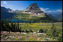 Meadows with alpine wildflowers, Hidden Lake and Bearhat Mountain behind. Glacier National Park, Montana, USA. (color)