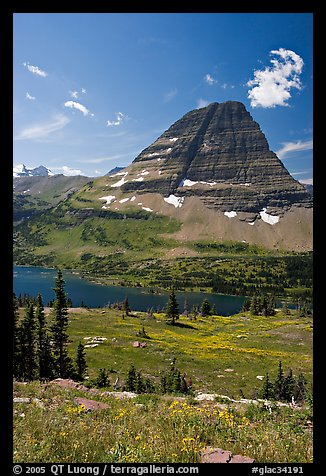 Alpine Meadows with wildflowers, Hidden Lake and Bearhat Mountain behind. Glacier National Park (color)