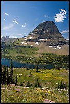 Alpine Meadows with wildflowers, Hidden Lake and Bearhat Mountain behind. Glacier National Park, Montana, USA.