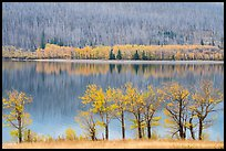 Trees in autumn foliage, burned forest, and reflections, Saint Mary Lake. Glacier National Park ( color)