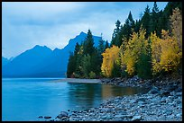 Trees in autumn color and Lake McDonald. Glacier National Park ( color)