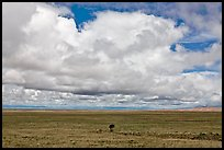 Solitary tree on prairie below cloud. Great Sand Dunes National Park, Colorado, USA. (color)