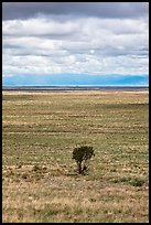 Lone tree and flatland. Great Sand Dunes National Park, Colorado, USA. (color)