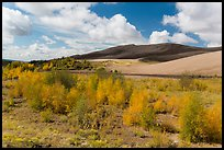 Riparian habitat along Medano Creek in autumn. Great Sand Dunes National Park, Colorado, USA. (color)