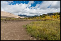 Grasses, patterns in sand of Medano Creek, sand dunes in autumn. Great Sand Dunes National Park, Colorado, USA. (color)