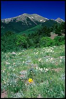 Summer meadow and Sangre de Cristo Mountains near Medano Pass. Great Sand Dunes National Park and Preserve, Colorado, USA.