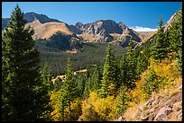Subalpine forest, Sangre de Cristo mountains. Great Sand Dunes National Park and Preserve ( color)