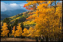 Autumn foliage and mountains near Medano Pass. Great Sand Dunes National Park and Preserve ( color)