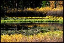 Pond with fall colors. Grand Teton National Park, Wyoming, USA.