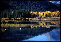 Fall foliage and reflections of Mt Moran in Oxbow bend. Grand Teton National Park ( color)