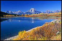 Fall colors and reflections of Mt Moran and Teton range in Oxbow bend. Grand Teton National Park, Wyoming, USA.