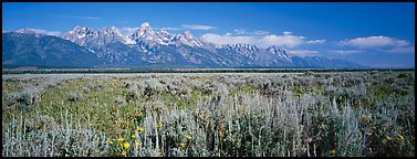 Sagebrush-covered flat and mountain range. Grand Teton National Park (Panoramic color)