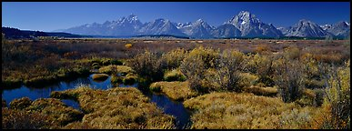 Wet meadows and mountains in the fall. Grand Teton National Park (Panoramic color)