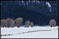 Long fence, cottonwoods, and hills in winter. Grand Teton National Park, Wyoming, USA. (color)