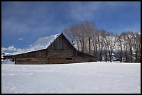 Wooden barn and cottonwoods in winter. Grand Teton National Park ( color)