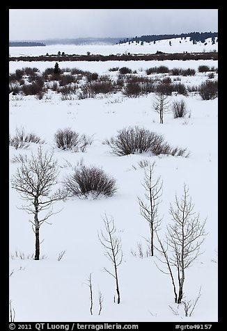 Bare trees and shurbs, frozen Jackson Lake. Grand Teton National Park (color)