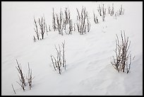 Shrubs and snowdrift patterns. Grand Teton National Park ( color)