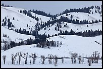 Hills and trees, Blacktail Butte in winter. Grand Teton National Park ( color)