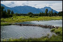 Beaver Dam and Teton Range. Grand Teton National Park ( color)