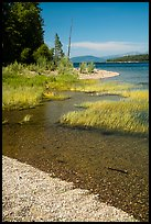 Island shoreline with grasses and clear water, Colter Bay. Grand Teton National Park ( color)
