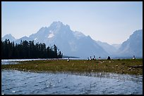 Geese and Mt Moran, Colter Bay. Grand Teton National Park ( color)