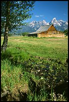Pasture and historical barn at the base of mountain range. Grand Teton National Park ( color)