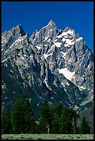 Rocky peaks of Cathedral group, morning. Grand Teton National Park ( color)