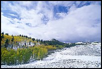Aspens, snow, and clouds. Rocky Mountain National Park ( color)