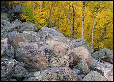 Lichen-covered boulders and yellow aspens. Rocky Mountain National Park, Colorado, USA. (color)