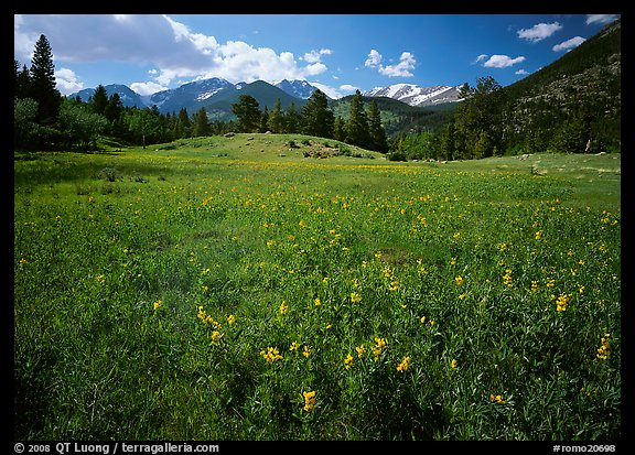 Wildflower carpet in meadow and mountain range. Rocky Mountain National Park, Colorado, USA.