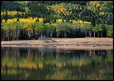 Mixed trees and  reflections. Rocky Mountain National Park ( color)