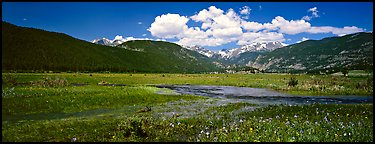 Summer wildflowers and stream in mountain meadow. Rocky Mountain National Park (Panoramic color)