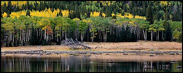 Aspens in autum foliage reflected in pond. Rocky Mountain National Park (Panoramic color)