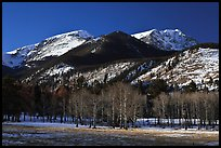 Aspens and Bighorn mountain in winter. Rocky Mountain National Park, Colorado, USA.