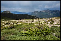 Bands of krummholz. Rocky Mountain National Park ( color)
