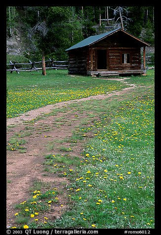 Meadow with flowers and historic cabin, Never Summer Ranch. Rocky Mountain National Park, Colorado, USA.
