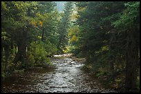 North St Vrain Creek flowing in dense forest, Wild Basin. Rocky Mountain National Park ( color)