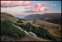 Krumholtz and alpine tundra at sunset. Rocky Mountain National Park ( color)